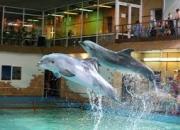 Поездка в Ярославль + дельфинарий