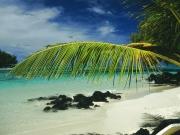Маврикий. Купить тур в Маврикий